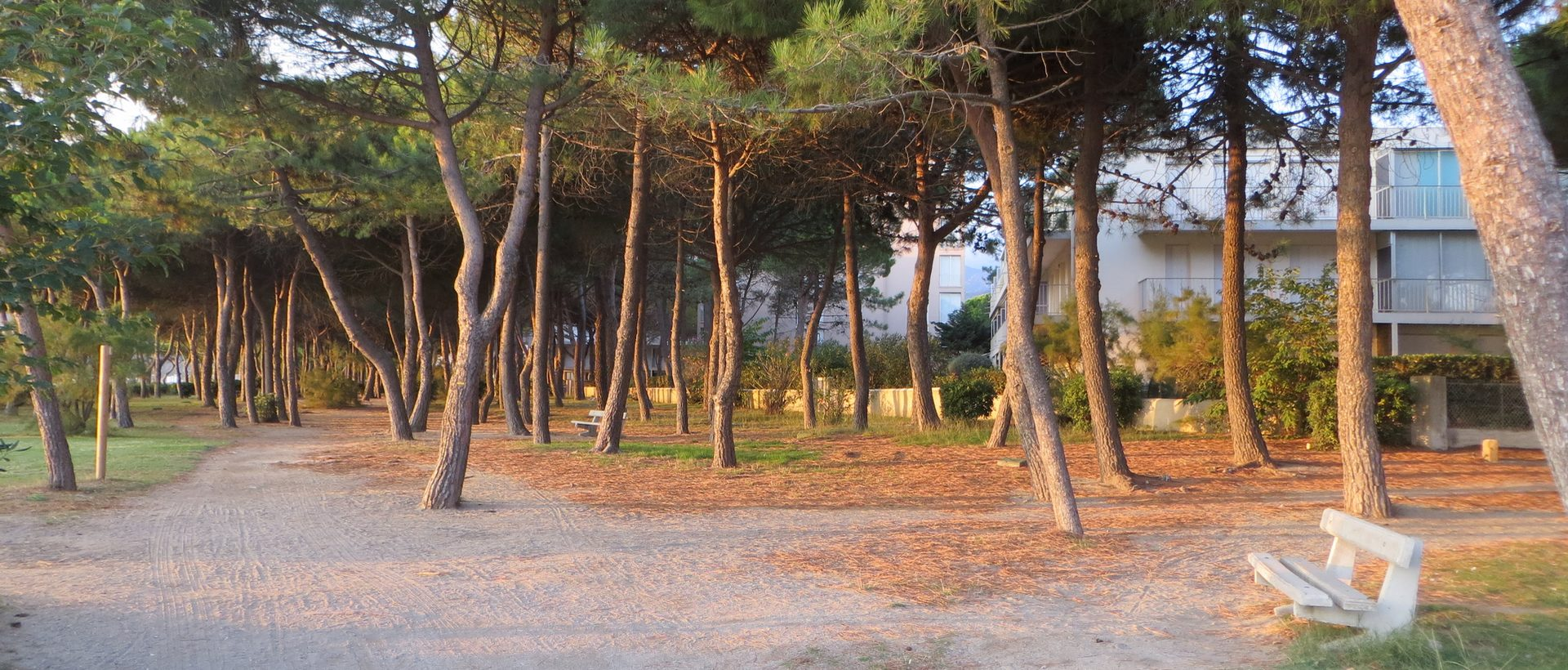 Photo de la location depuis la forêt de pins